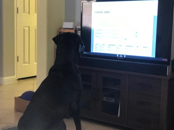 Fox listening in